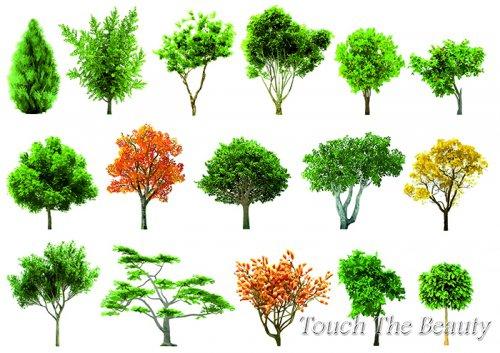 №254 Деревья