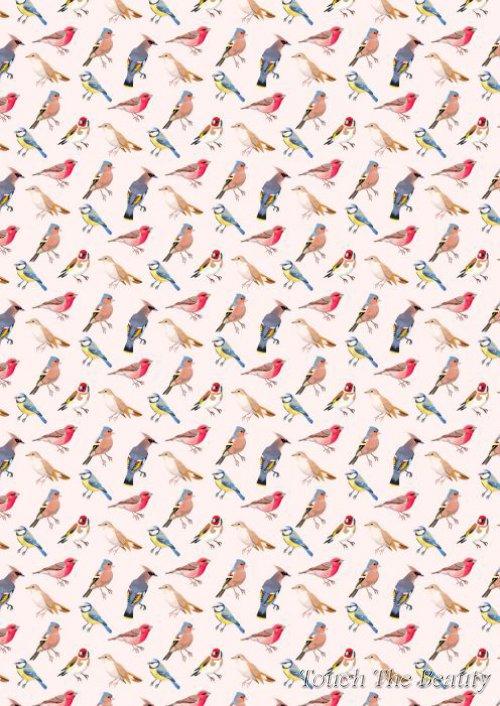 №258 Птички