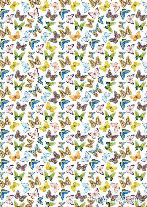 №269 Бабочки