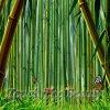 фон для развивающей книжки Бамбук и бабочки